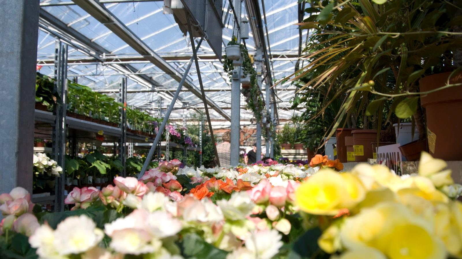 Flowers and plants in greenhouses at Gaarne Garden Center