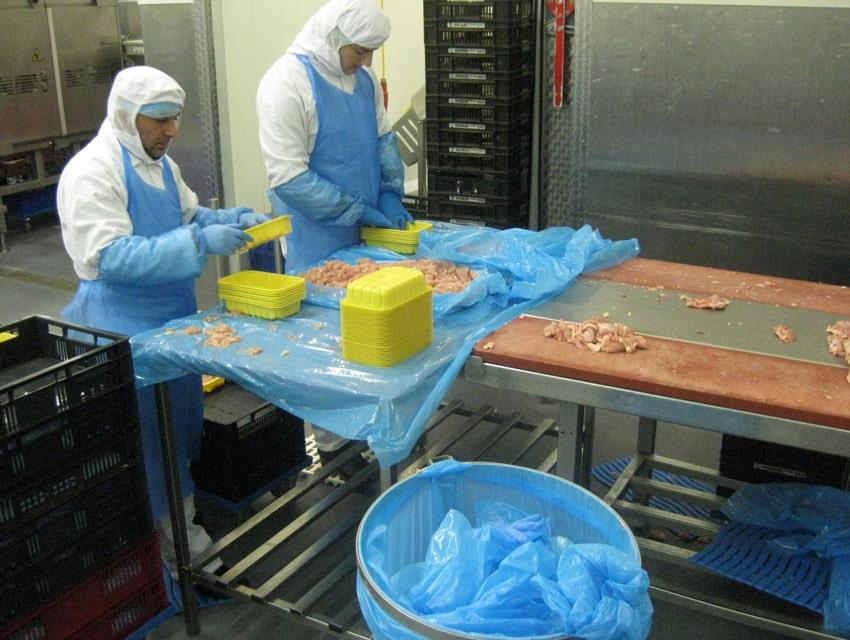 Two men with blue plastic aprons sorting chicken at assembly line